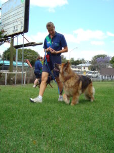 RSPCA Dog Training