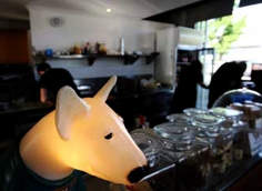 Brown Dog Cafe, Woolloongabba