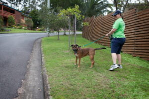 Dog Walking in Brisbane with Cracka