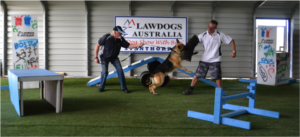 Law Dogs in Action
