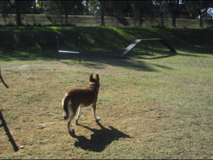 dog-walking-brisbane
