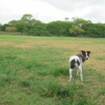Discover Brisbane's dog parks | Stroll through Brisbane's best dog parks with Spot the Dog Walker's Anne-Marie George as she reviews the city's parks on our website http://spotdogwalk.com.au/dog-parks/