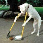 dog-cleanin-poo-e1437671115265