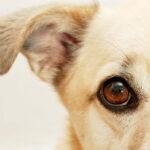 Close-up of an adorable dog's face