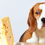 A-dog-looking-shocked-and-surprised-about-cheese